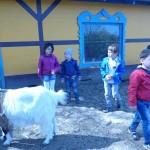 Bauernhof 118